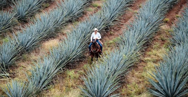 Rent a Luxury Villa and Visit a Magical Town Called Tequila Mexico